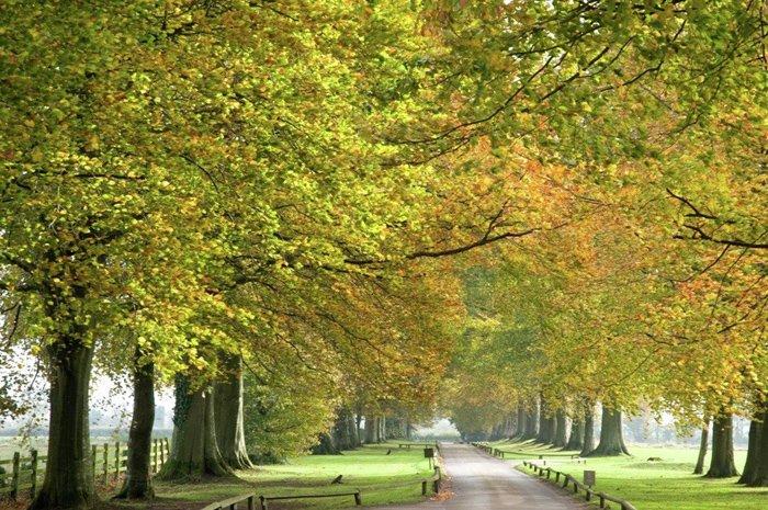 Babington House (Англия)