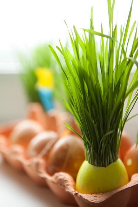 Как вырастить зеленую траву к Пасхе