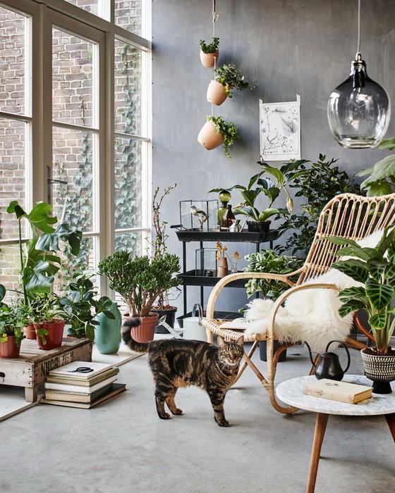 Домашние растения_03
